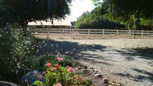 Random Ranch Shots